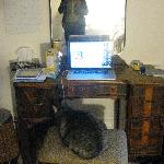 One of the cats trying to use my computer (I brought it into my room, they generally don't roam)