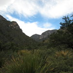 McKittrick Canyon