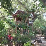 The Mangrove Garden Restaurant &amp; Accommodation