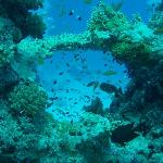 Dive Point Red Sea Foto
