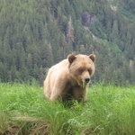 Khutzeymateen Grizzly Bear Sanctuary