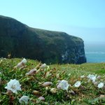 Skomer Island