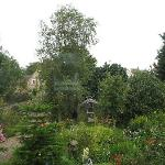 The garden from bedroom window