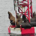 Sea lions on buoy at entrance to Petersburg harbor