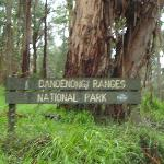 Dandenong Ranges
