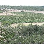 View of vineyards 2