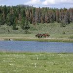 Photo of Flying A Ranch