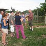  Tour of vineyard is included