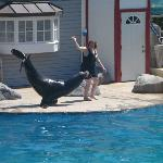  The Sea Lion show