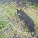 Black Bear in the morning!
