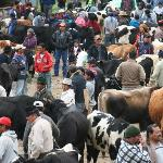 Otavalo saturday animal market