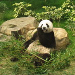 Macau Giant Panda Pavilion