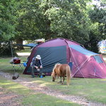 Ashurst Campsite