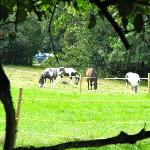  Horses nearby