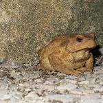  Toad outside the church