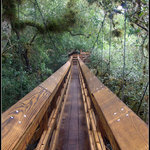 Myakka Canopy Walkway