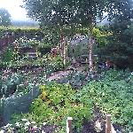  the veggie patch - his leeks are better!!