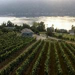 100 acres of vineyards surround the restaurant