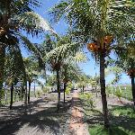 coconut trees within the property on its way to the beach