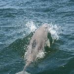 I literally swam with the wild dolphins...amazing