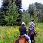 Cowboy Greg Leading Through Wildflowers