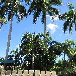  Beautiful palms looking up from the pool