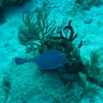Chankanaab Reef