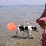 dog catching fish in the sea