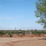 View of pistachio trees on ranch