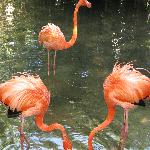Flamingos in a shallow lake