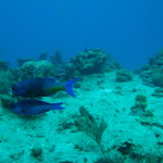 Palancar Reef