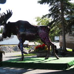 The welcoming moose!