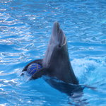 Rimini Dolphinarium