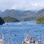 Foto de Tofino Inlet Cottages aka The Mini Motel