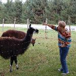  The llamas were so much fun to watch.