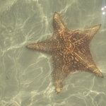 Star Fish Point