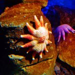 Sea Life Blackpool
