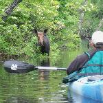 Seeing moose on the river