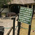 Foto de Mukambi Safari Lodge