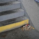 Cigarette butts and other debris