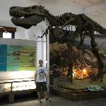 pre historic section with T-Rex replica
