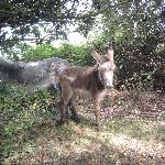 Donkeys come to visit
