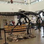 San Diego Natural History Museum Foto