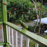 The balcony and parrot (which greeted us)