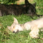 The adorable pups were dozing in the sun.