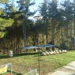 Pine forest, lovely for shade at the back of the swimming pool