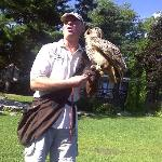  falconry show