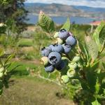 Foto de Sutherland Blueberry Bed & Breakfast