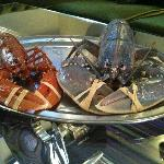 Rare Blue Lobster in our lobster tank!