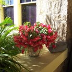  Flowers always bloom at the Coquina Inn